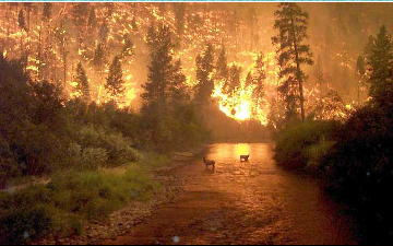 0_0_0_montana_bushfire_deer_in_water