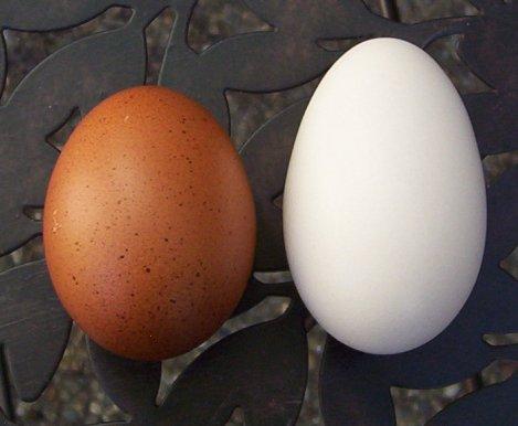 Marans egg no.2