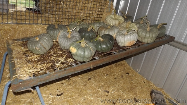 Pumpkin rack