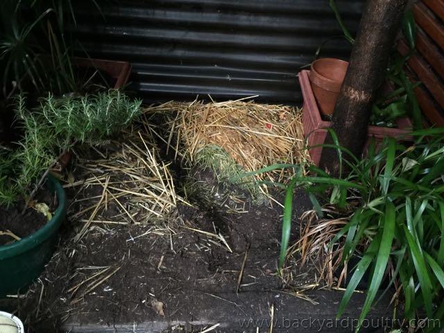 Pixie's burrow