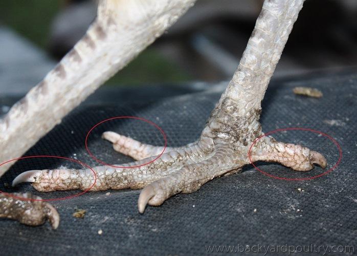 Split White Toes