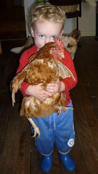 Rescue hen