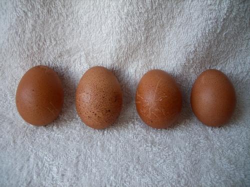 Patience's eggs