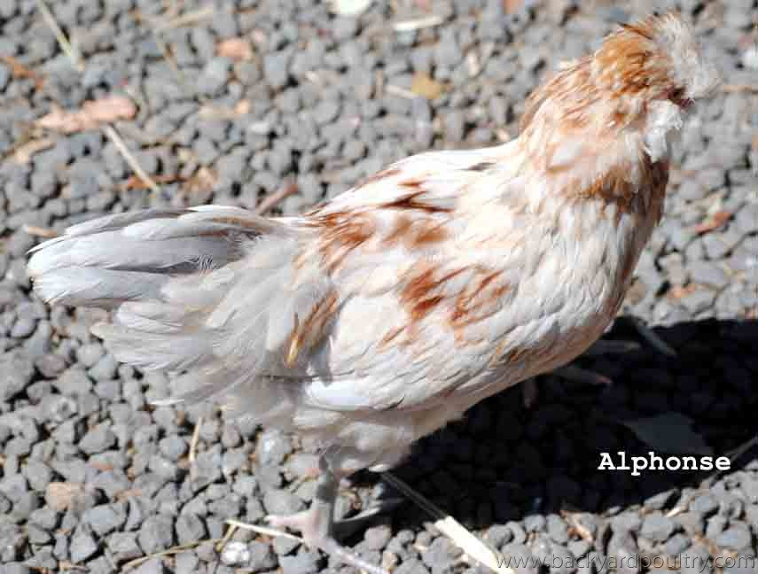 Alphonse 1