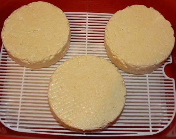 Camembert day 1