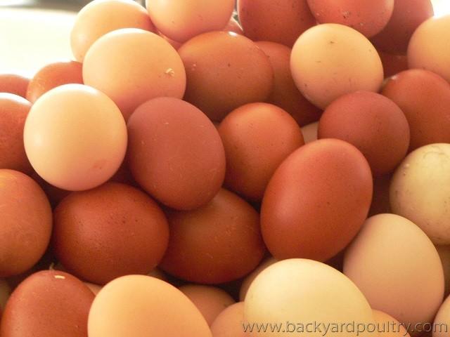 eggs111