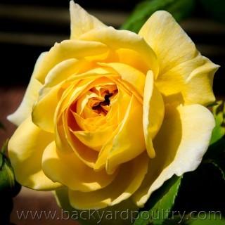 flower_1_of_1_