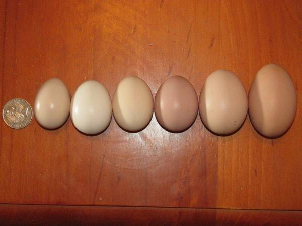 Egg Selection