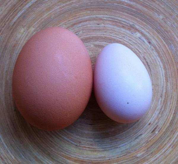 First Egg :) 20/8 @ 26grams
