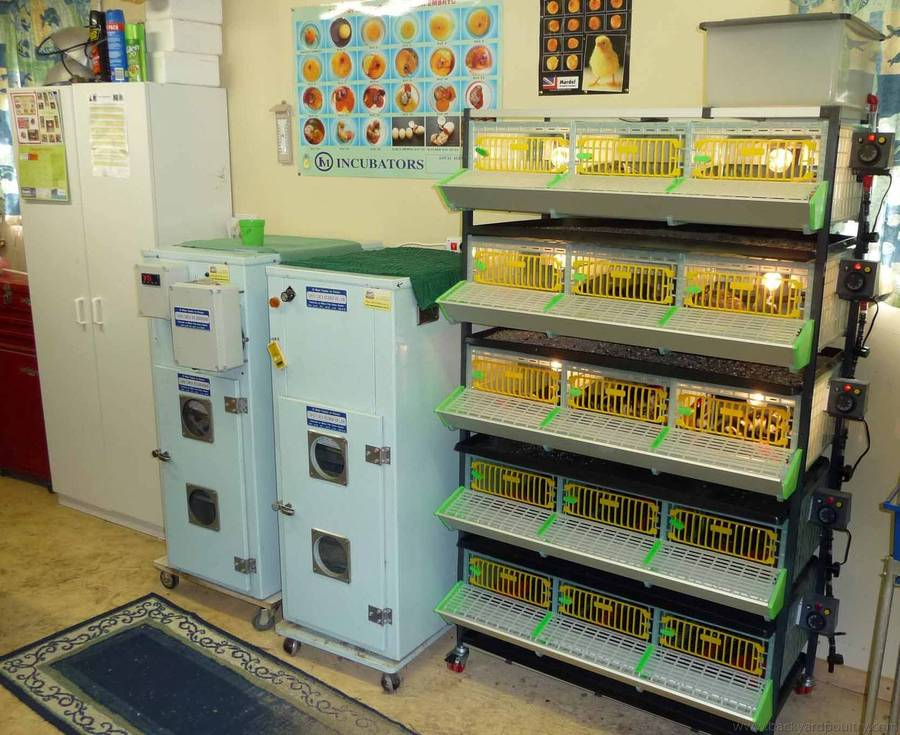 New 5 Tier Brooder next to Incubator & Hatcher