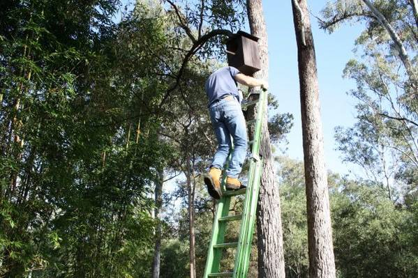 Nesting boxes for waterfowl