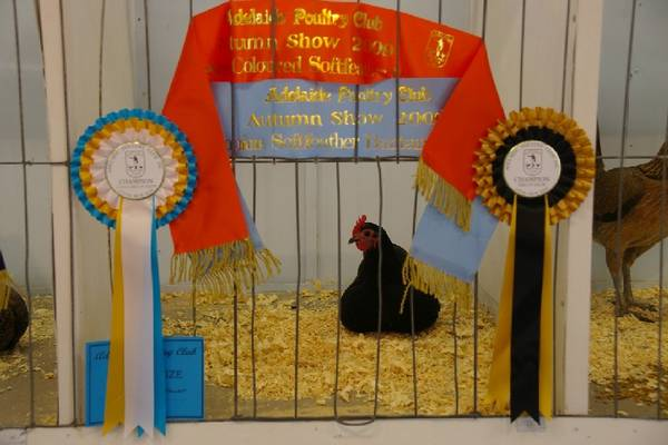 Adelaide Poultry Club