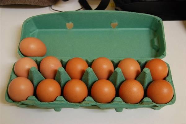 Barnie eggs 09