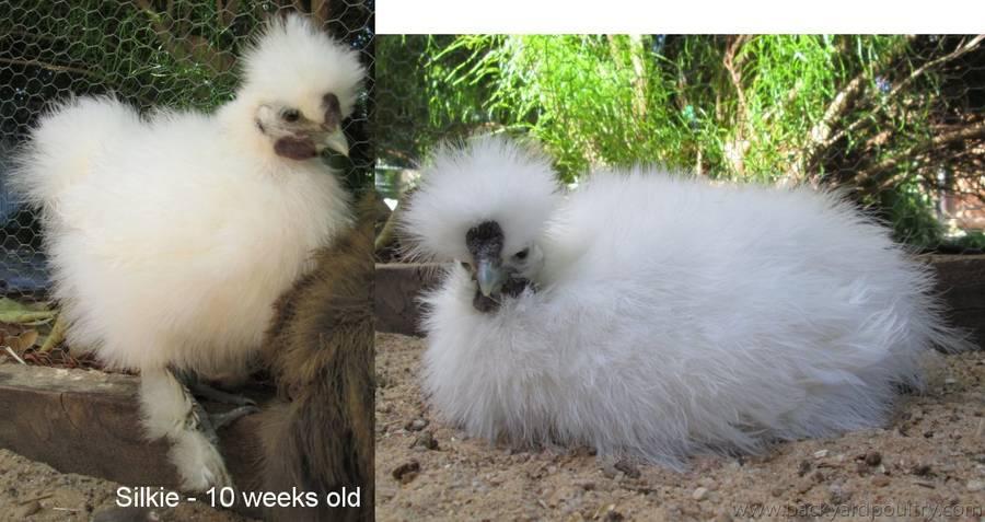 Flossy 10 weeks old