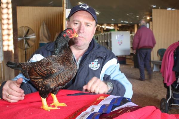 Best in Show - Wagga Wagga Poultry Club