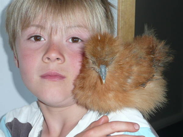 Ben and his Silkie
