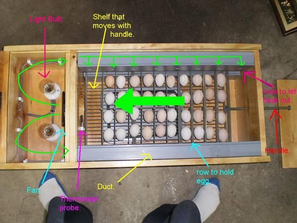 macca incubator 4