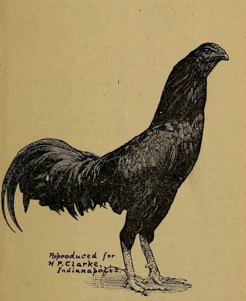 aussie pit pre 1900