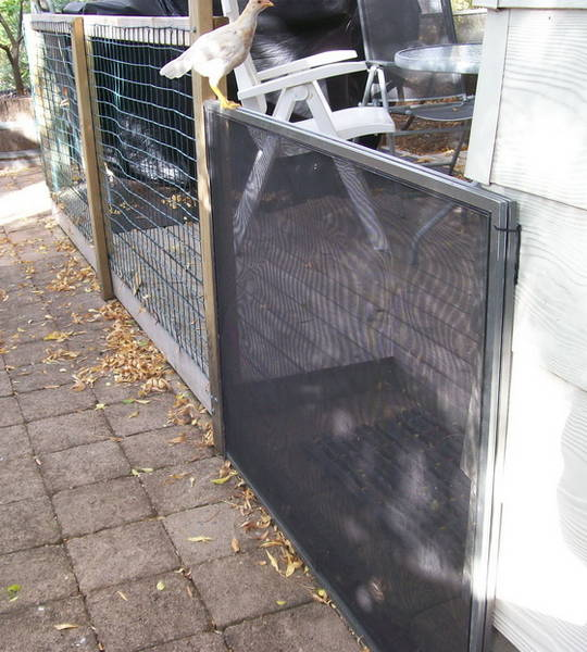 easy chicken proof gate