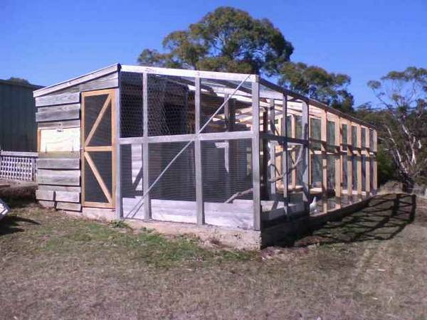 Chook Pen Extensions March 08