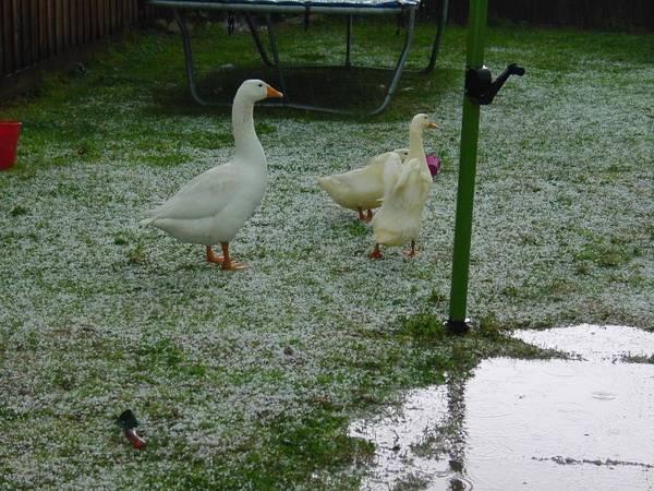 Back yard after hail