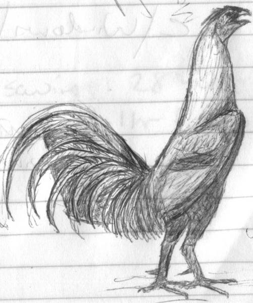 gamecock sketch