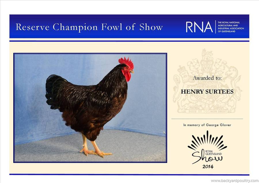 reserve_champ_fowl_of_show