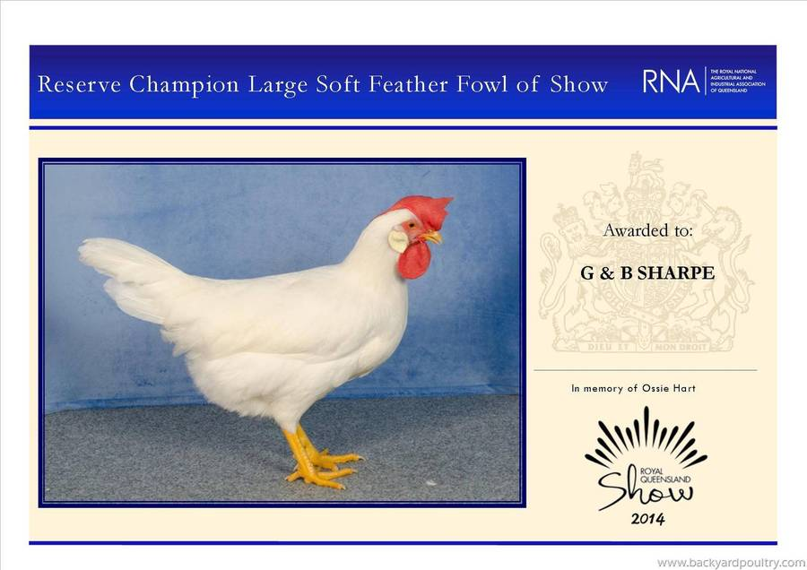 reserve_champ_large_softfeather_fowl_of_show