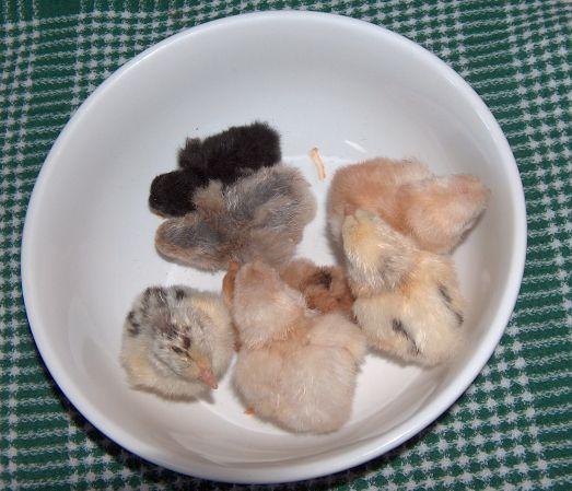 A bowl of yummy pekin nugget chickens
