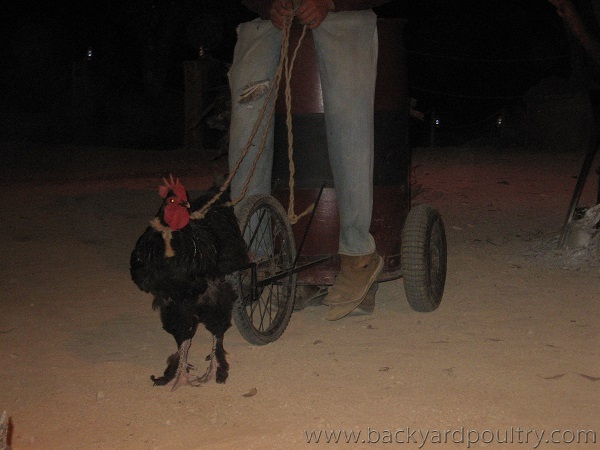 roostermobile