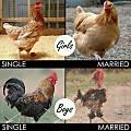 Married-Single.jpg