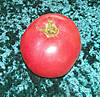 eva-purple-ball-tomato.jpg