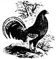 old_english_gamefowl_article_1910b.jpg