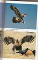 wt_eagles.png