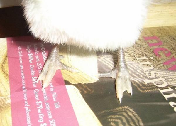 """Mumble's """"Duck Feet"""""""