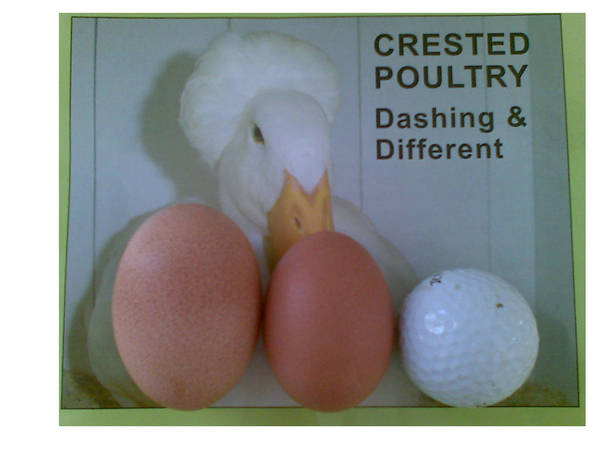Barnie Eggs 26042010