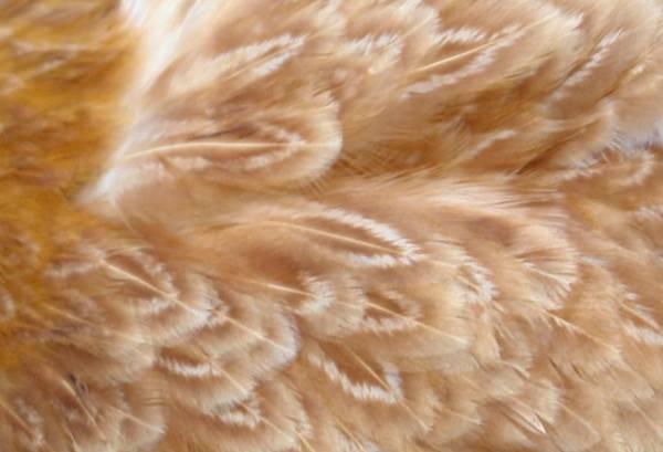 closeup of lacing
