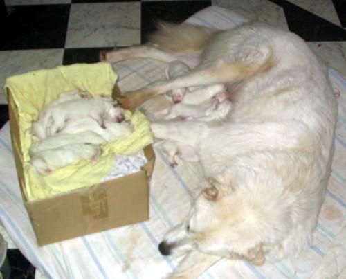 Georgie & Pups 2