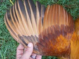 201 wing