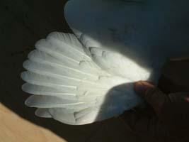 217 wing