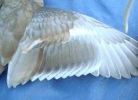 324 wing