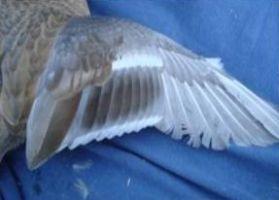 325 wing