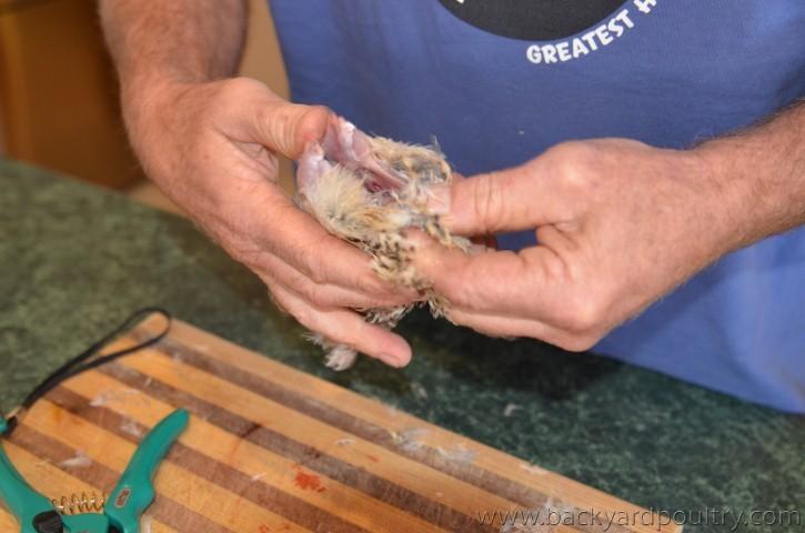 quail_11_Small_