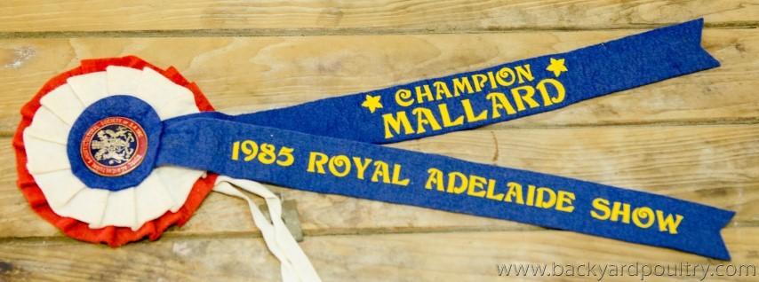 1985_Adelaide_Show_Ribbon_Mallard_1_of_1_