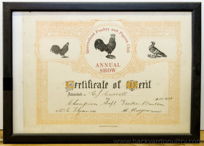 Qld_Pigeon_Poultry_Club_Cert_1_of_1_-2