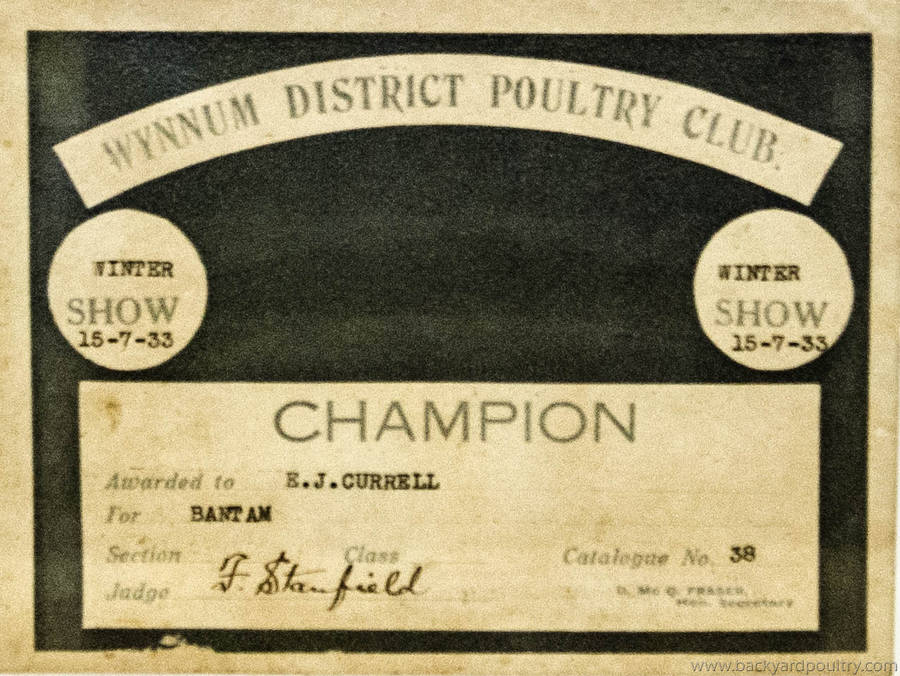 Wynnum_District_Poultry_Club_1933_Champ_Bantam_1_of_1_-3