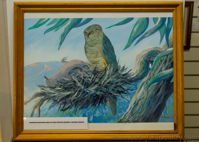 raptor_pigeon_rings_painting_1_of_1_