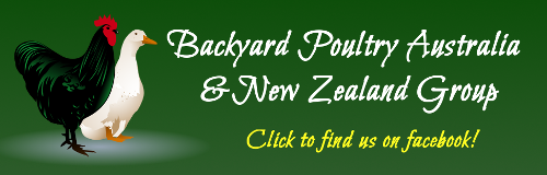 facebook_advert_banner_backyard