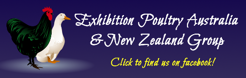facebook_advert_banner_exhibition