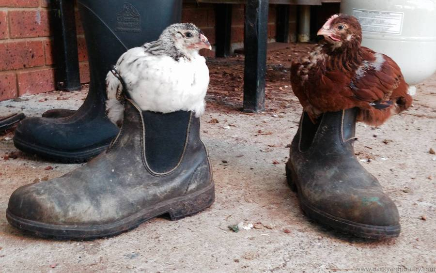 These Boots are made for perching